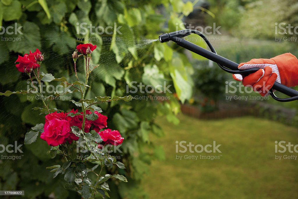 Protecting plant from vermin royalty-free stock photo