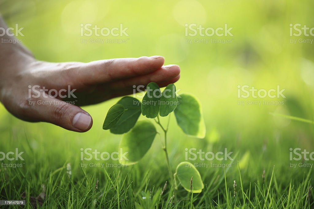 Protecting the Environment royalty-free stock photo