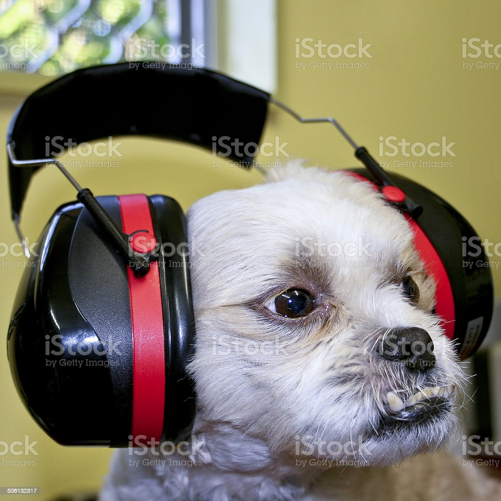 Protective Ear Muffs stock photo