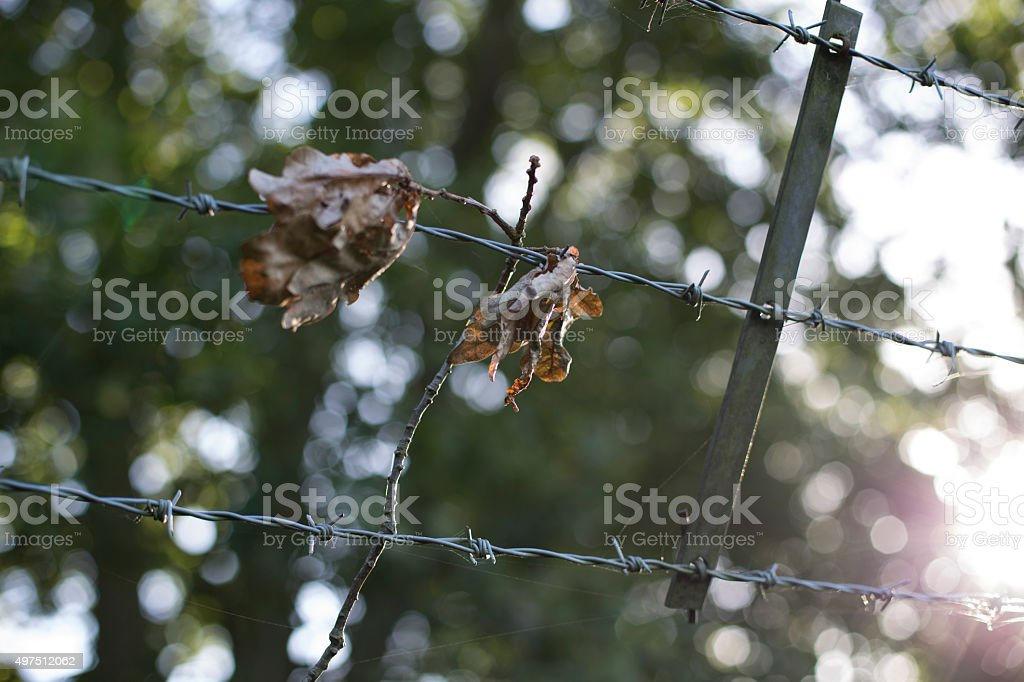 Protective wire 2 stock photo