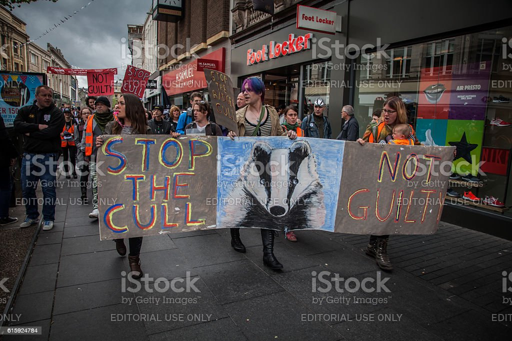 Protest March for animal rights - Save the Badger stock photo