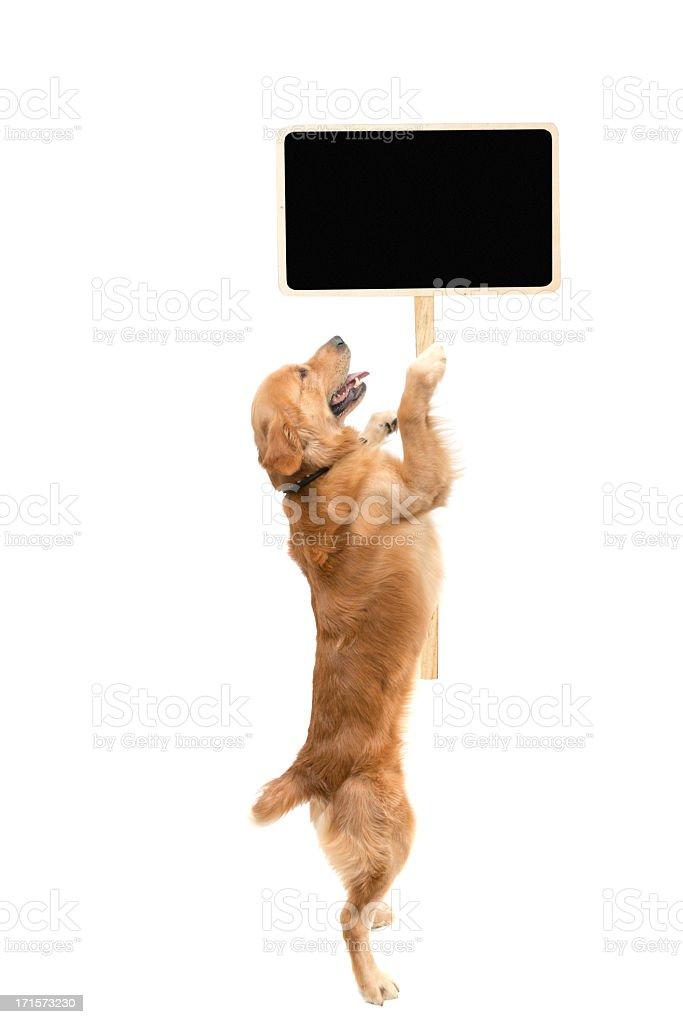Protester dog royalty-free stock photo