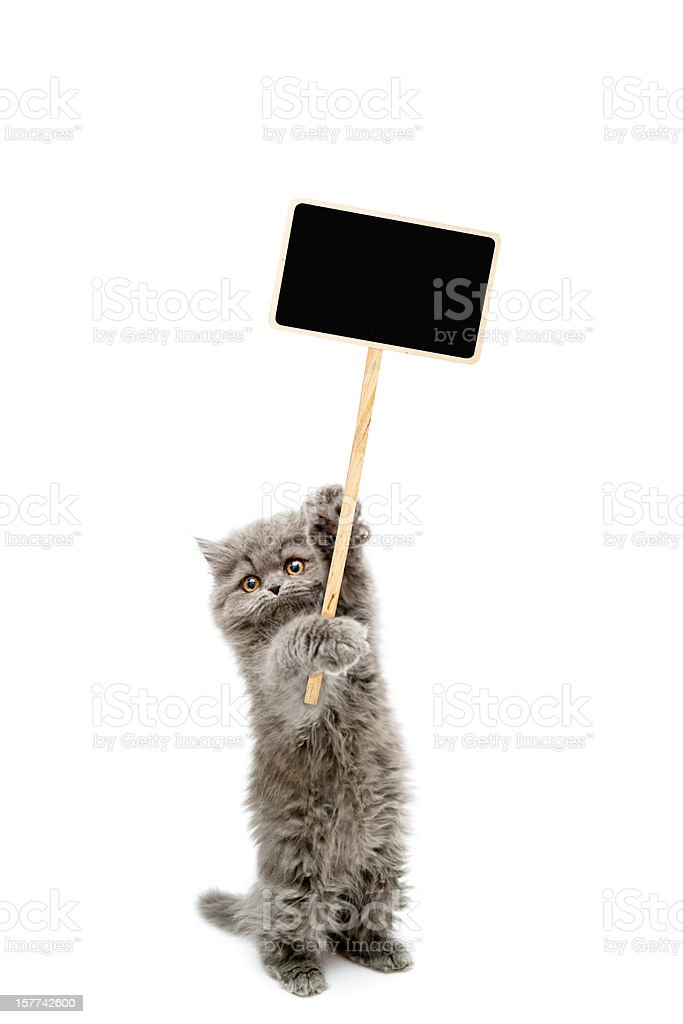 Protesters cat stock photo