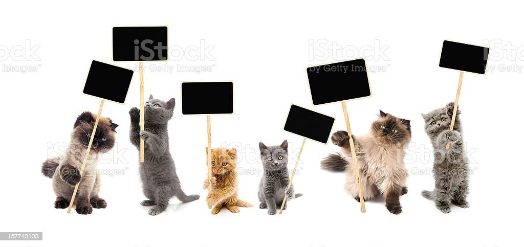 Protesters cats stock photo