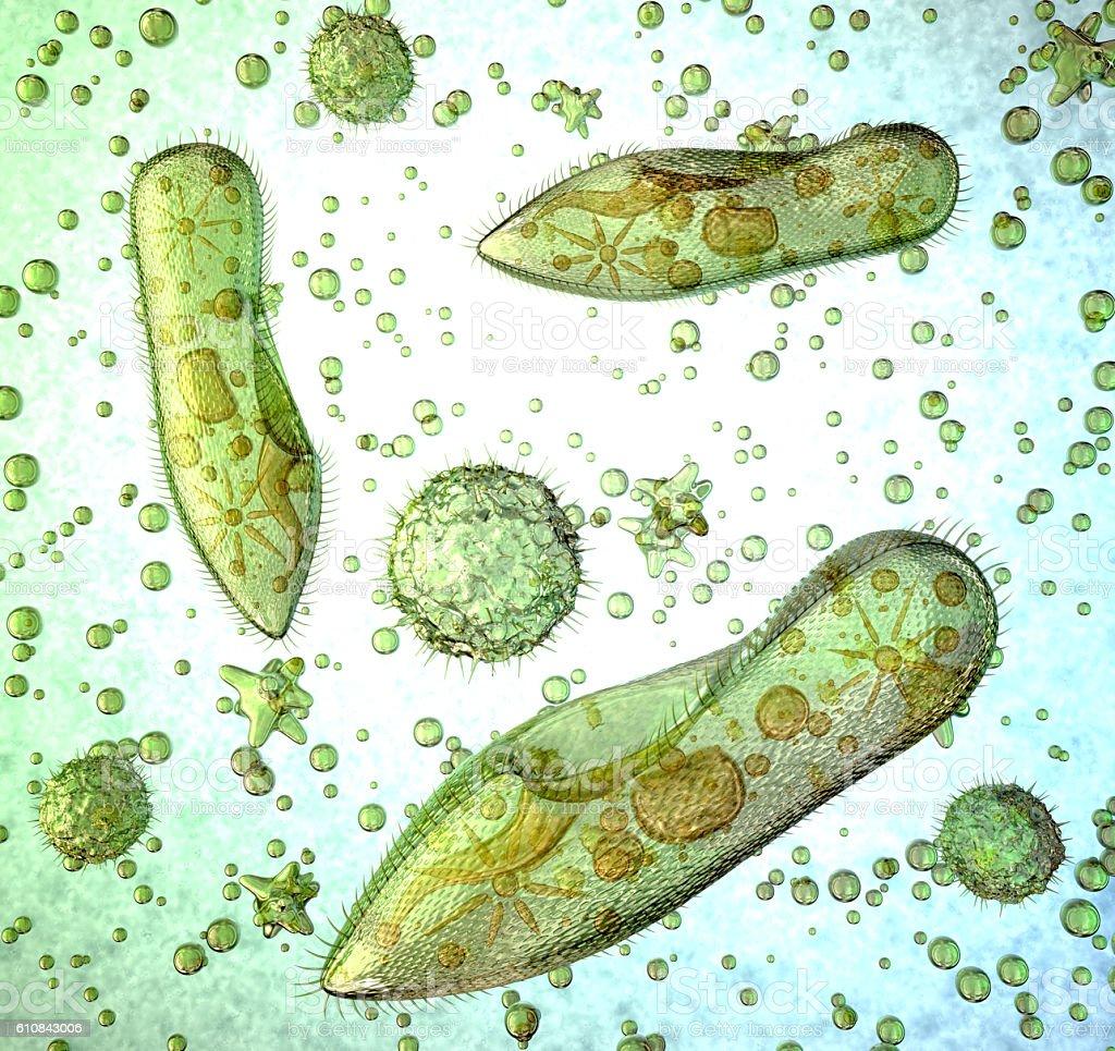 Protozoa under a microscope. stock photo