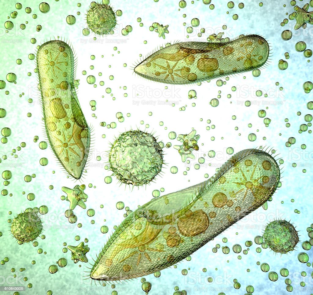 Protozoa under a microscope. stock photo