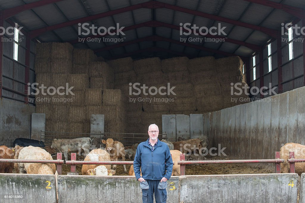 Proud farmer with his herd stock photo