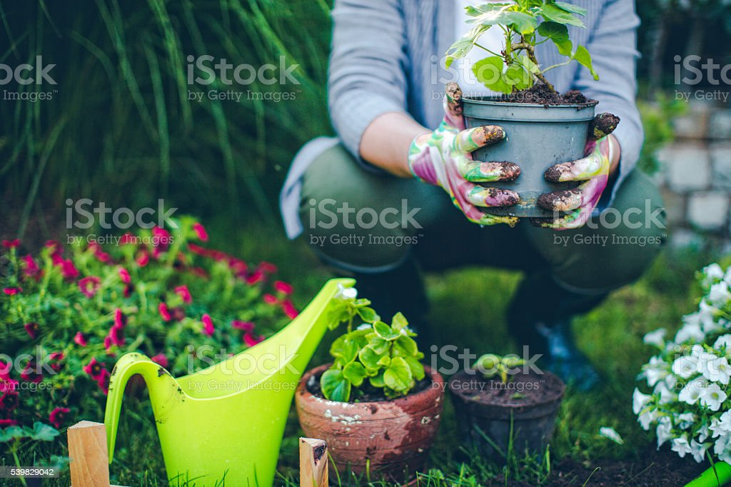 Portrait of mid-adult woman proudly showing her plants