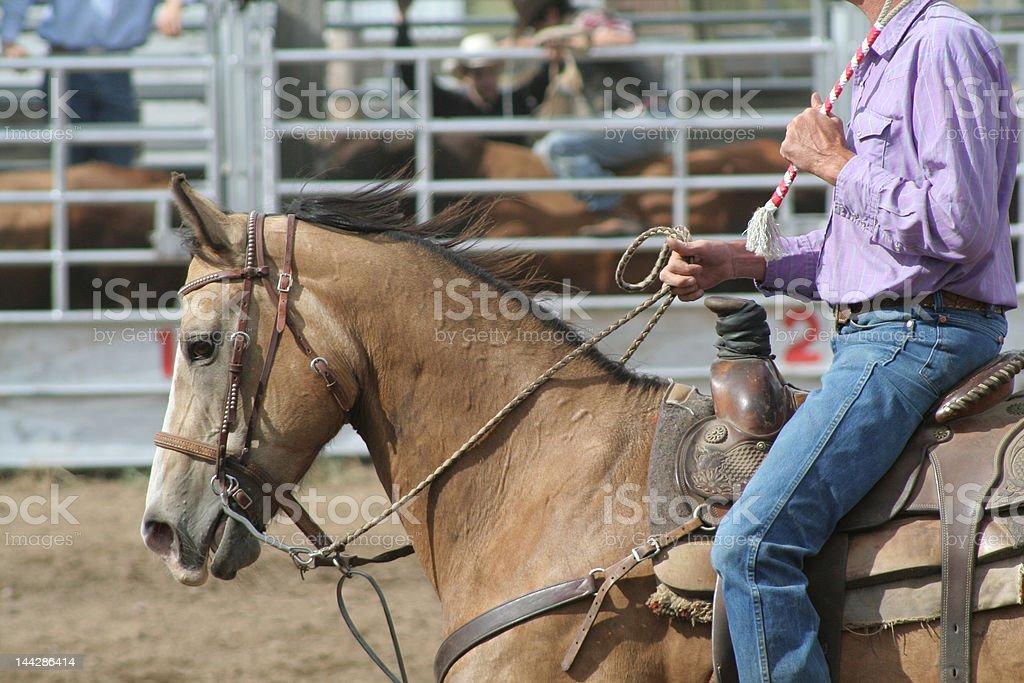Proud Pony stock photo
