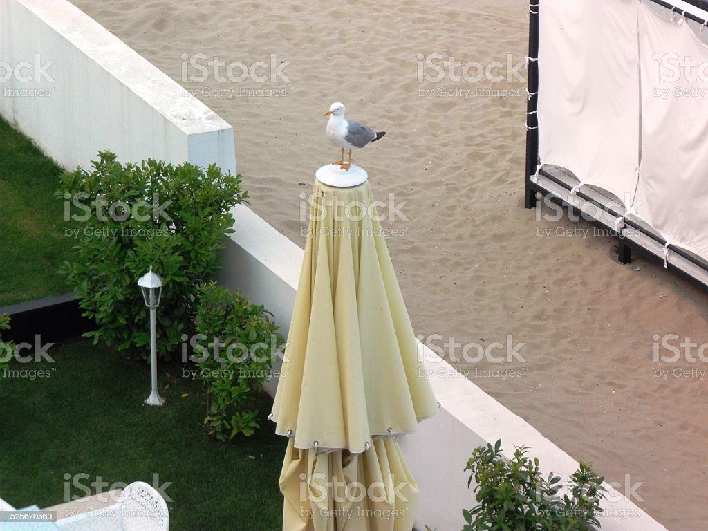Proud Seagull stock photo