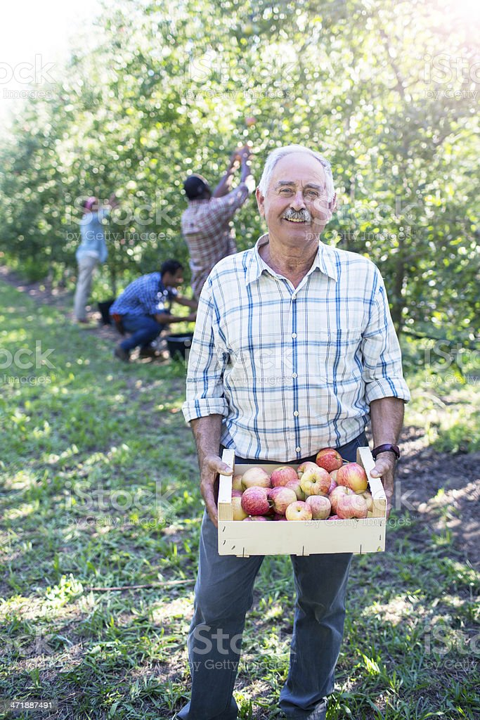 Proud senior man in his orchard stock photo