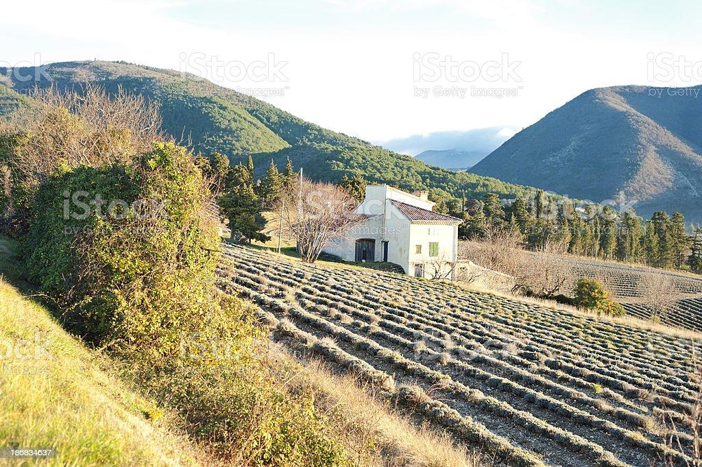 Provencal landscape across lavender fields, France stock photo