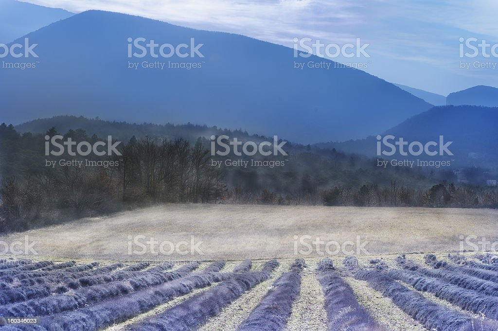 Provencal lavender and mountains in winter mist, France stock photo