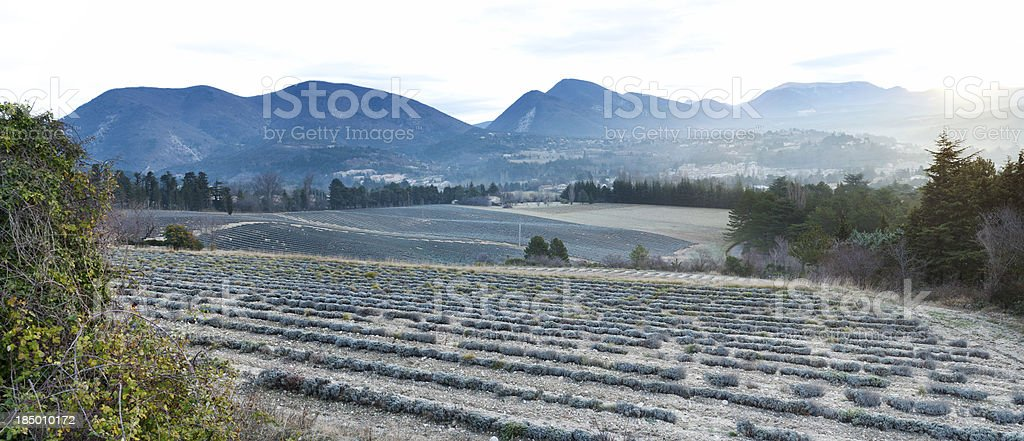 Provencal panorama across lavender fields, France stock photo