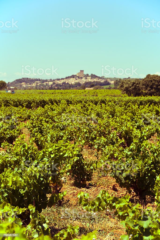 Provencal vineyard stock photo