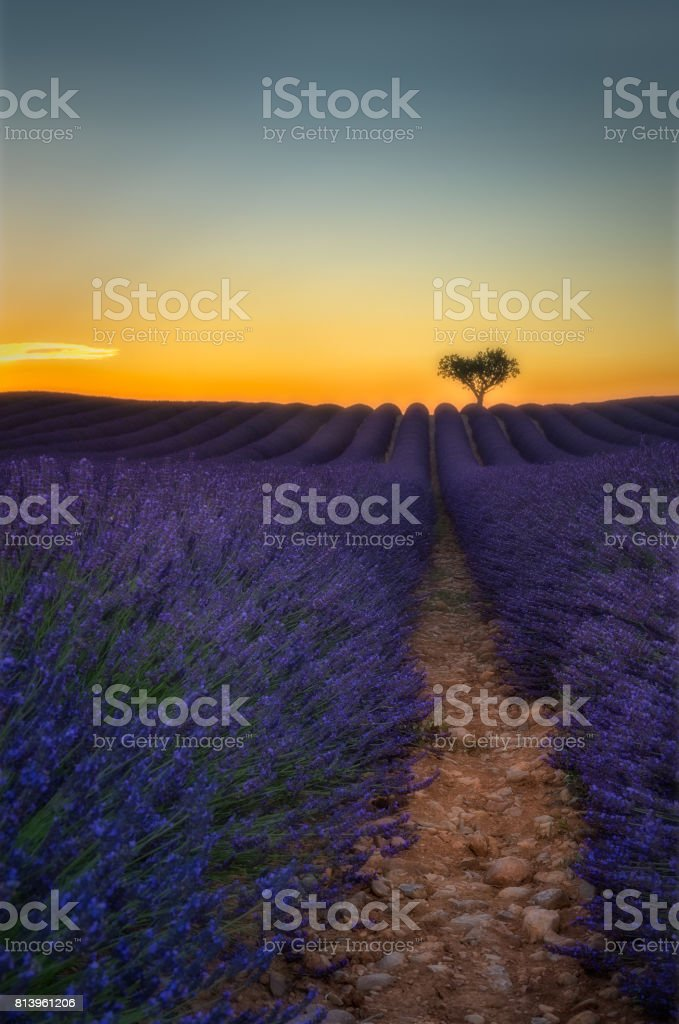 Provence and lavender stock photo