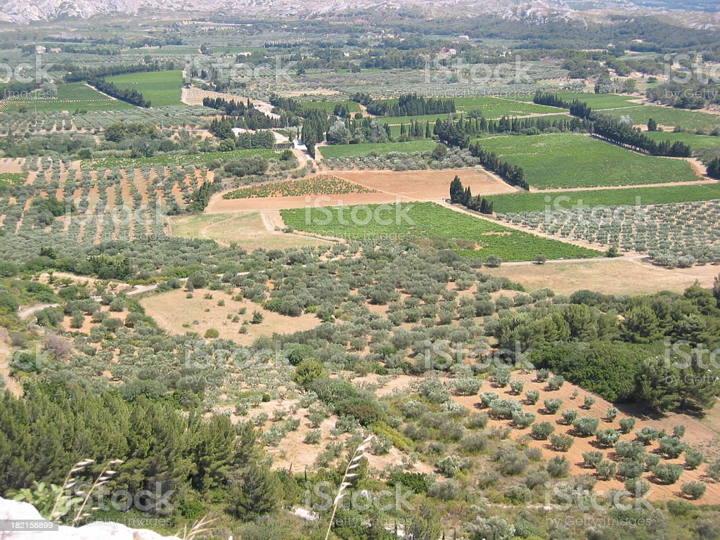 Provence fields with olive trees stock photo