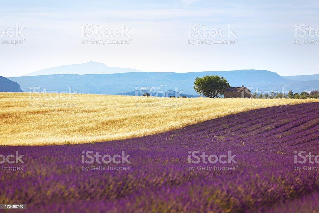 Provence (France, Europe) stock photo