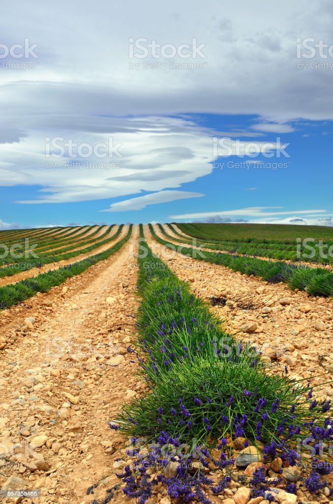 Provence rural landscape stock photo