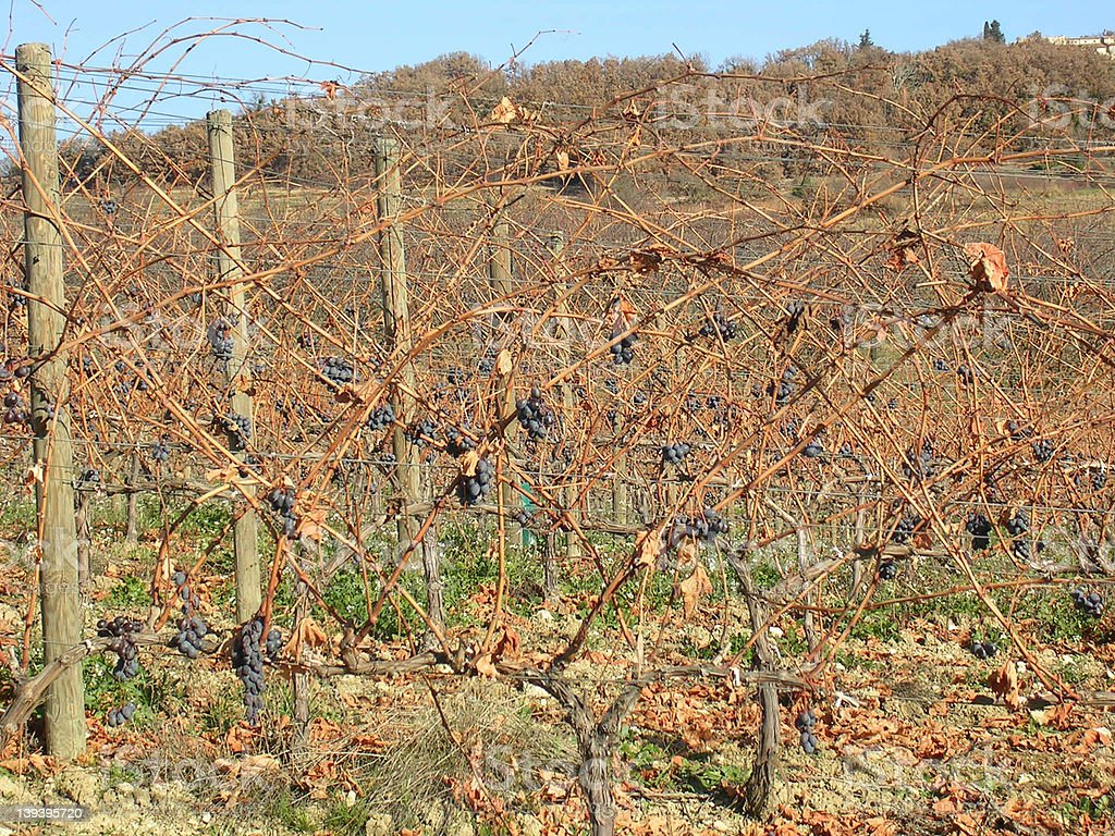 Provence vineyard in winter stock photo