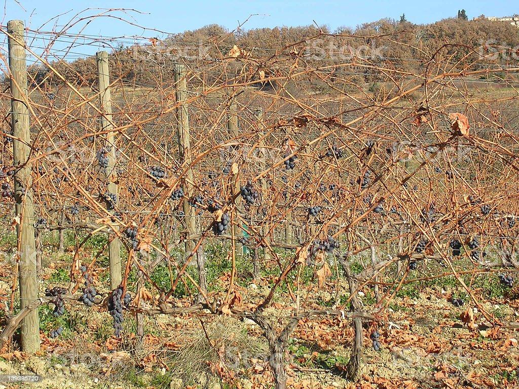 Provence vineyard in winter stock photo