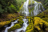 Proxy falls in Oregon forest