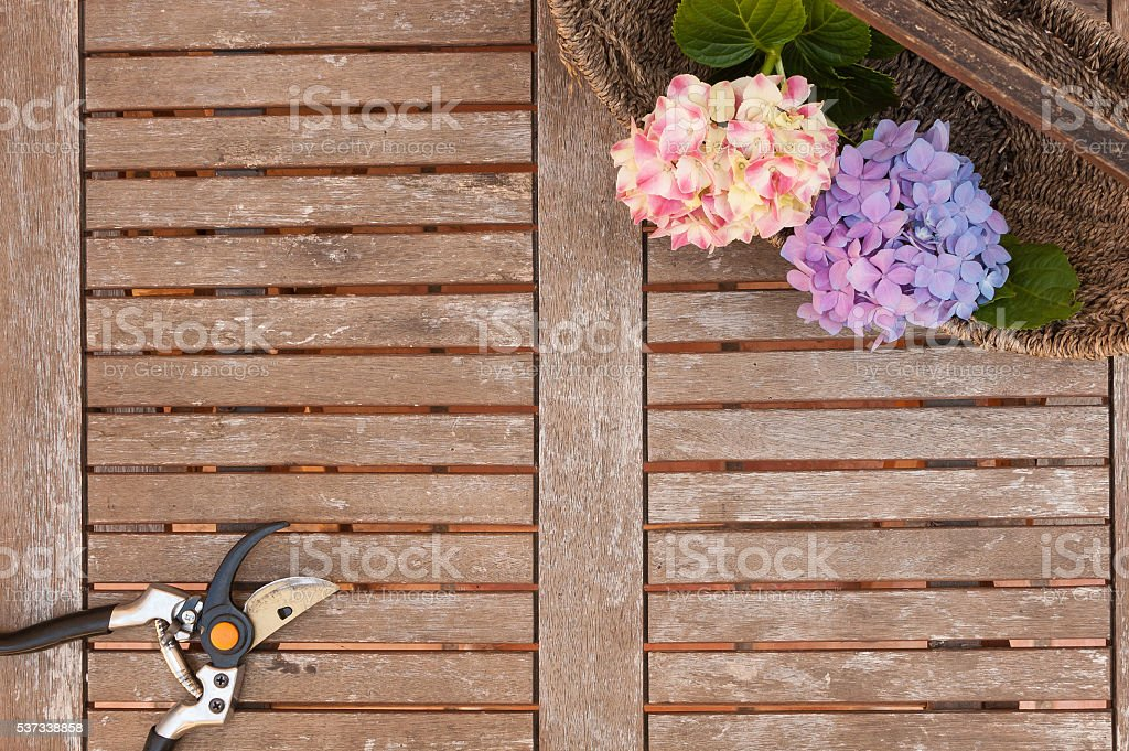 Pruner and Hydrangeas flowers in basket  on weathered wooden table stock photo