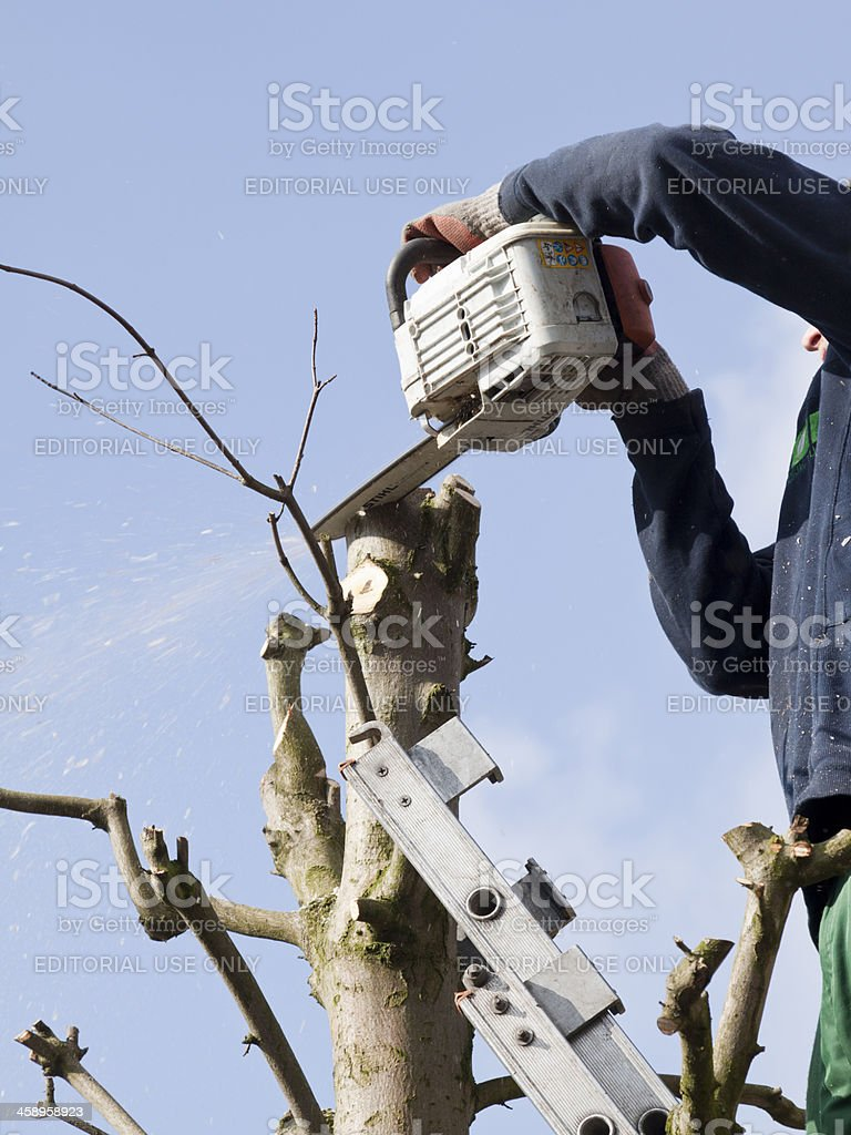 Pruning a treetop with chainsaw royalty-free stock photo