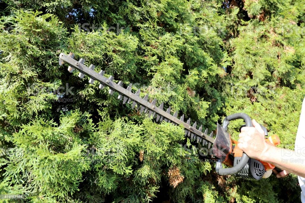 Pruning and cutting hedges with chainsaw stock photo