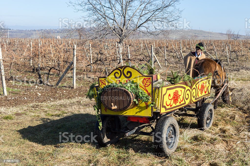 Pruning of the vineyards ritual in Bulgaria stock photo