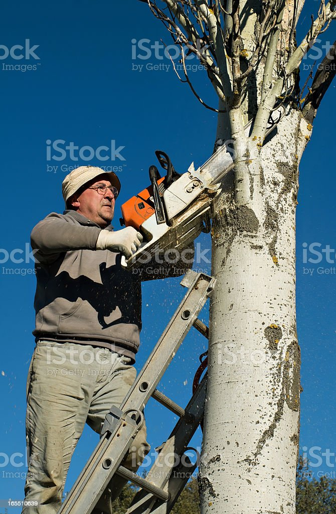 pruning royalty-free stock photo
