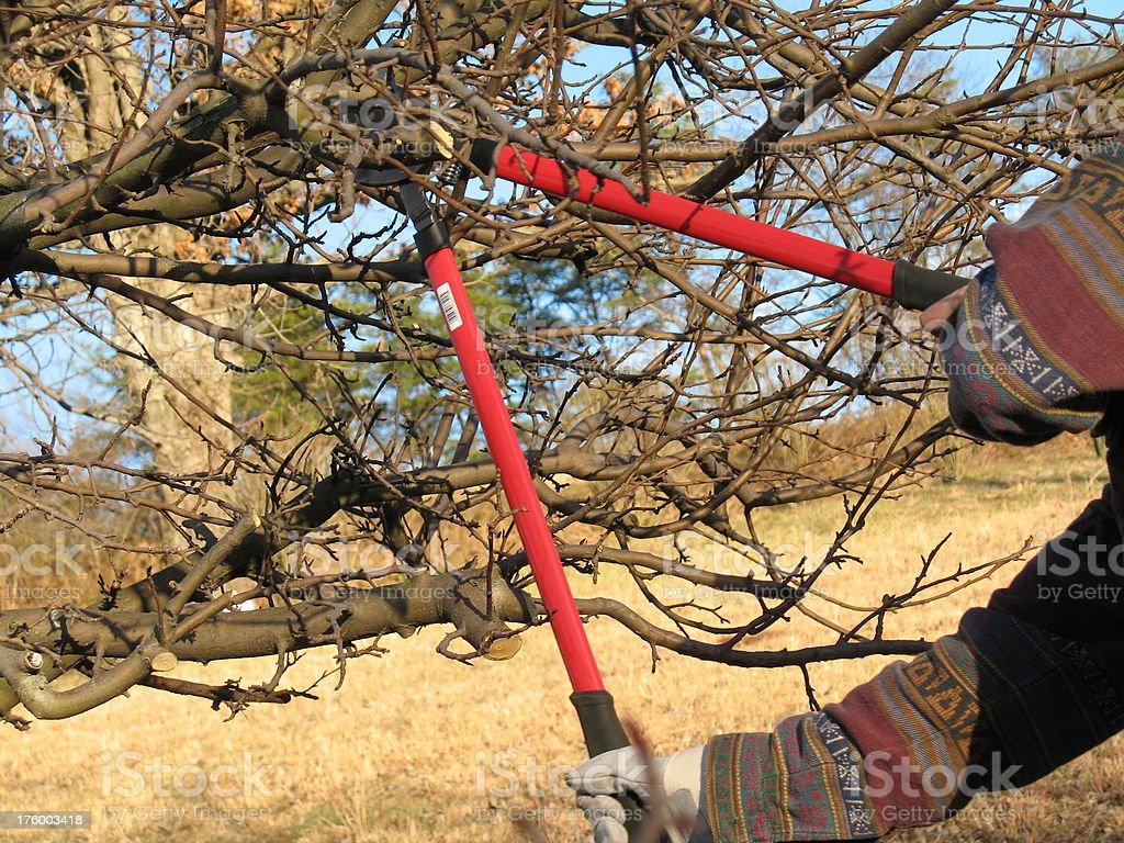 Pruning royalty-free stock photo