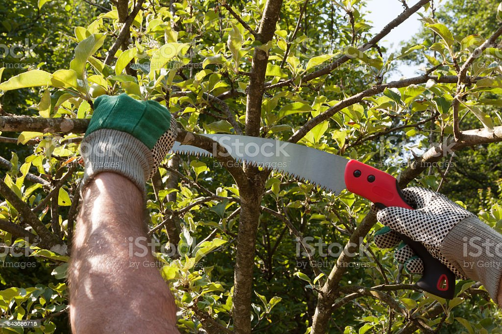 Pruning Saw stock photo
