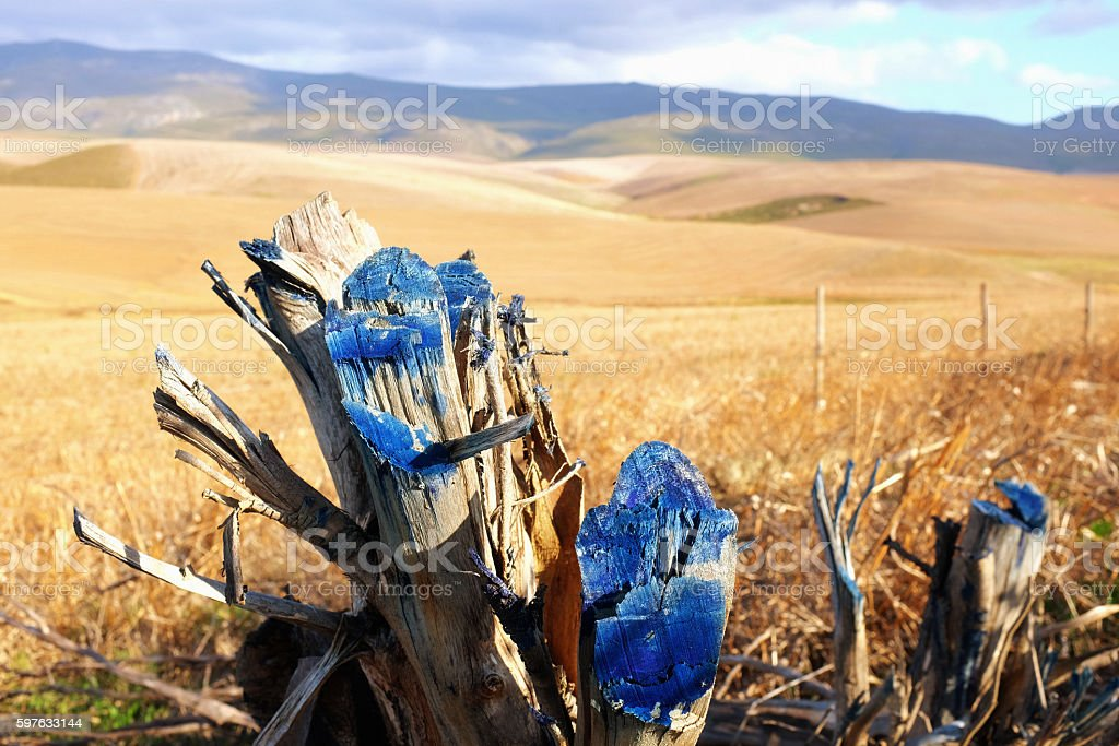 Pruning sealant on stump by remote rural fence stock photo