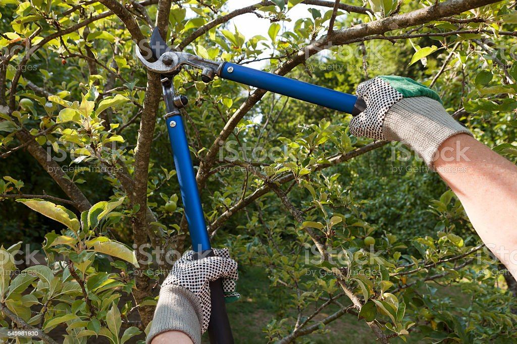 pruning shears stock photo