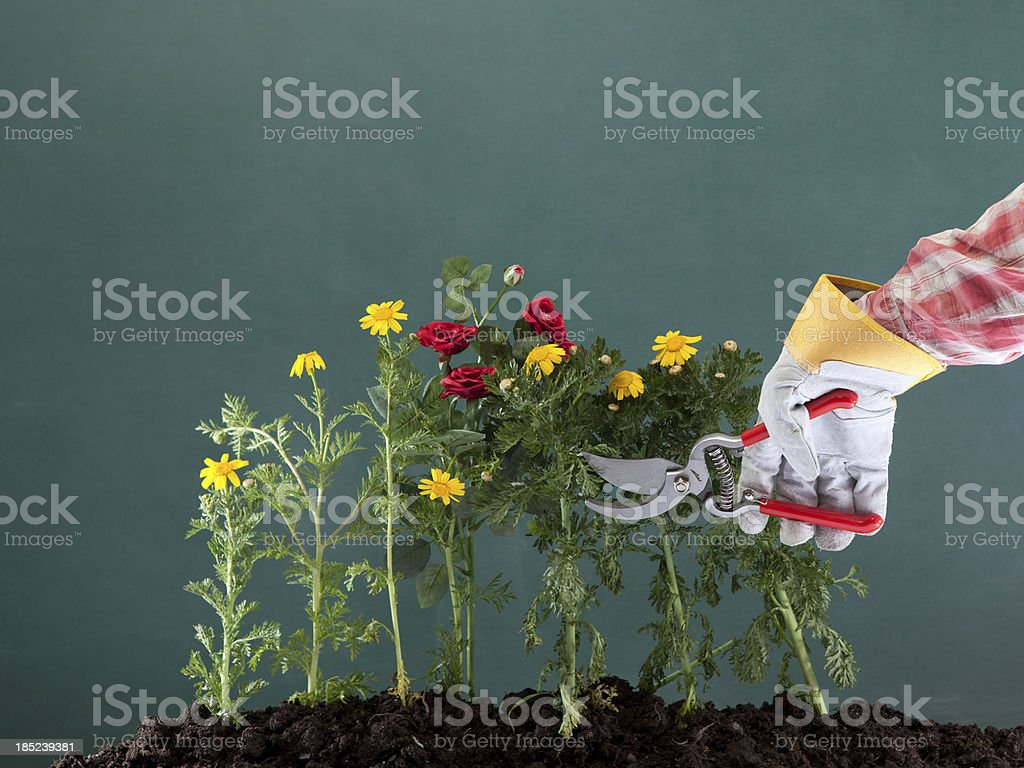 Pruning, soil and flowers on blackboard royalty-free stock photo