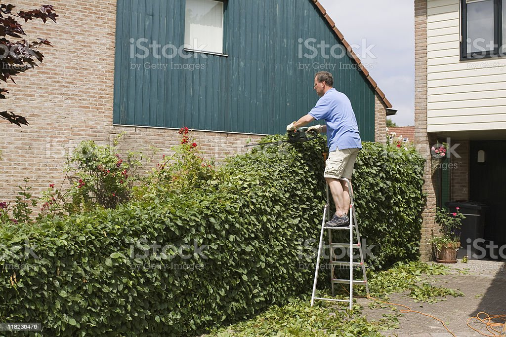 pruning the hedge royalty-free stock photo