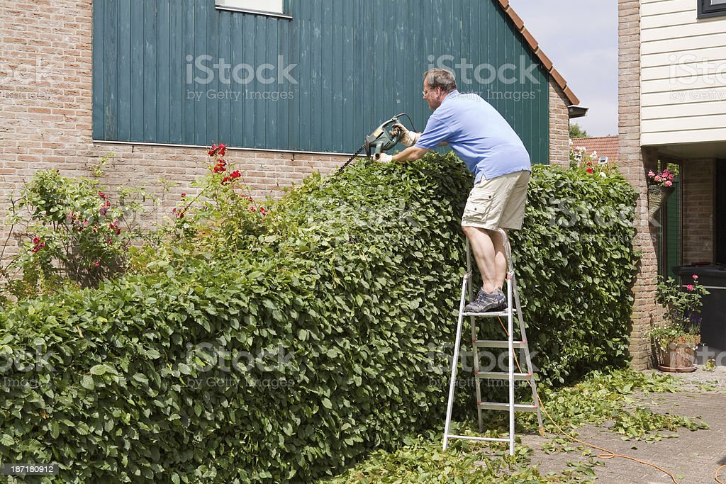 pruning the hedge stock photo