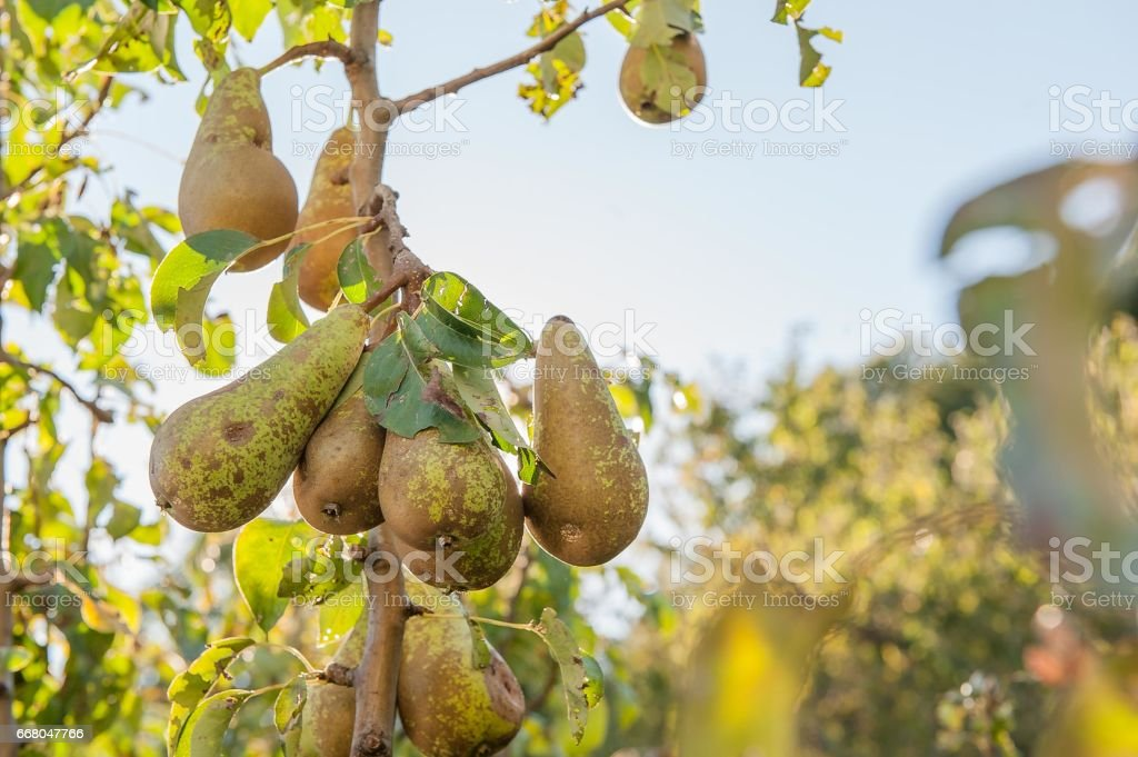 Pruning tree stock photo