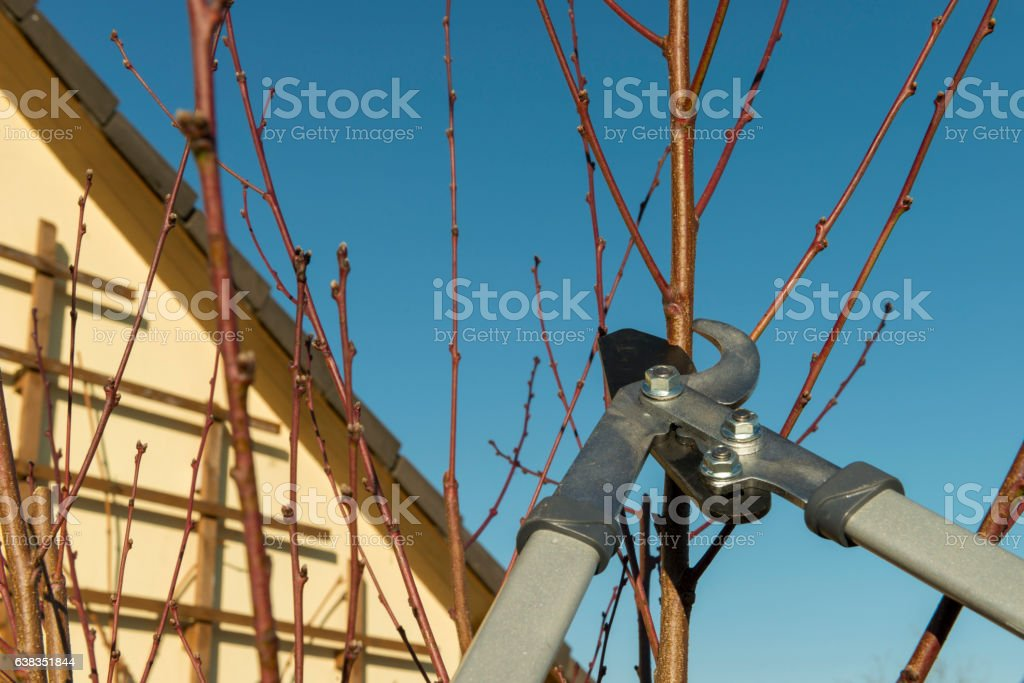Pruning trees stock photo