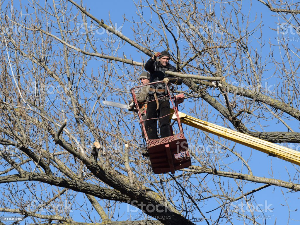 Pruning trees using a lift-arm stock photo