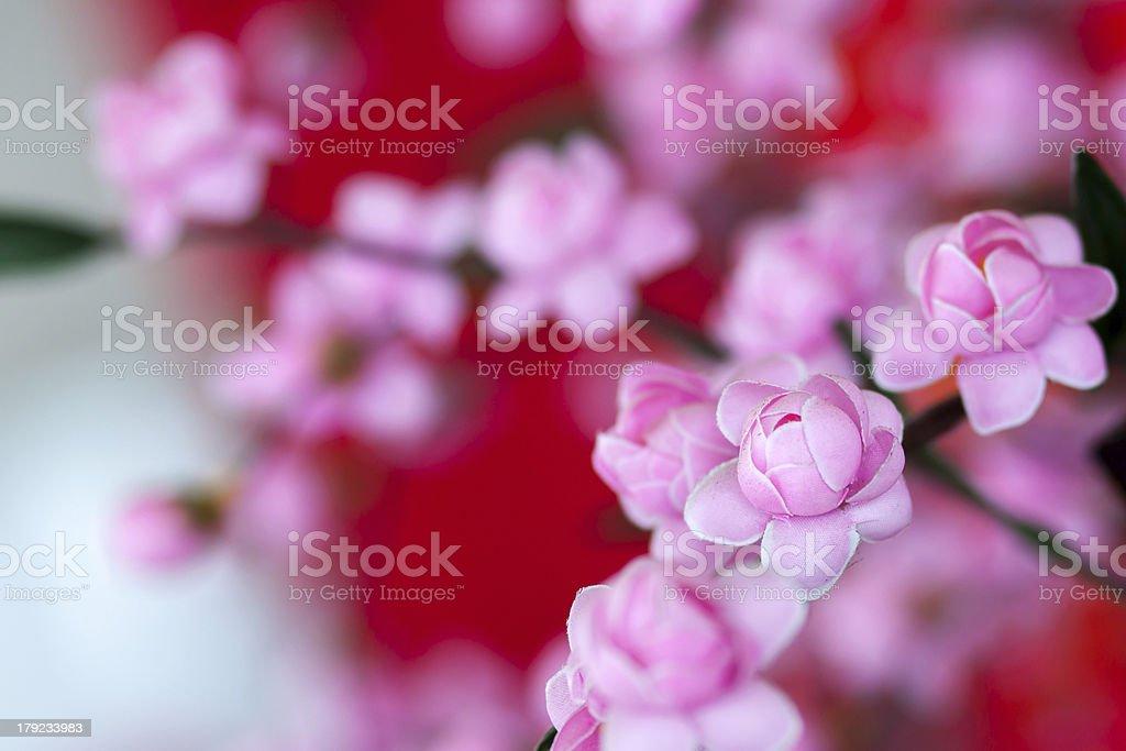 Prunus cerasoides royalty-free stock photo