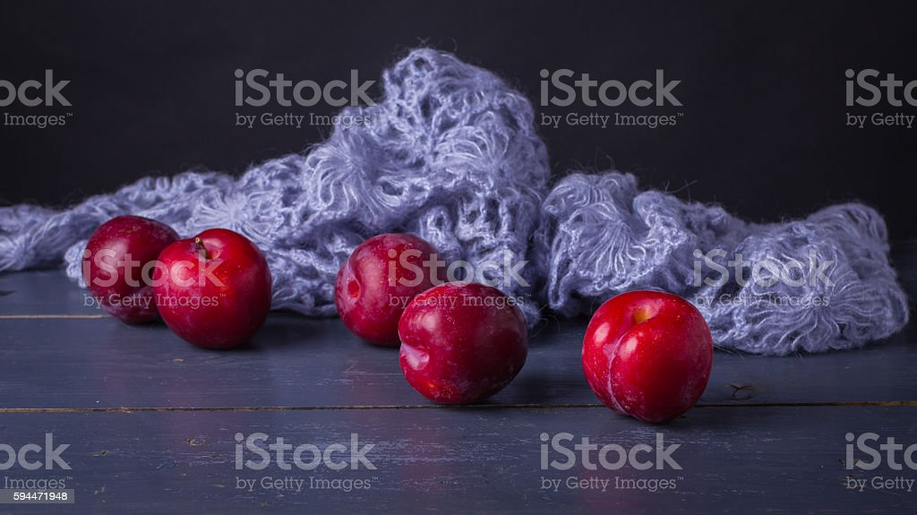 Prunus domestica with knitted blue wol stock photo