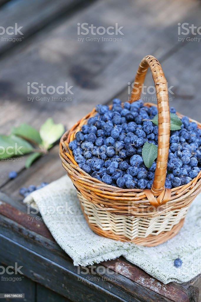 Prunus in the basket stock photo
