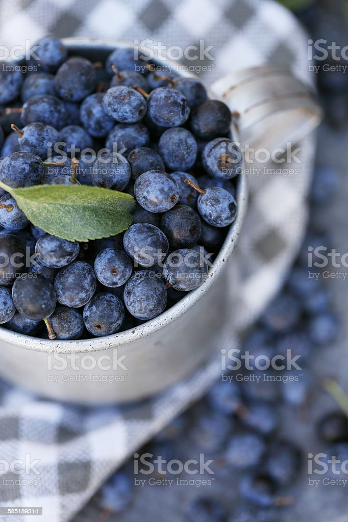 Prunus spinosa, close-up stock photo