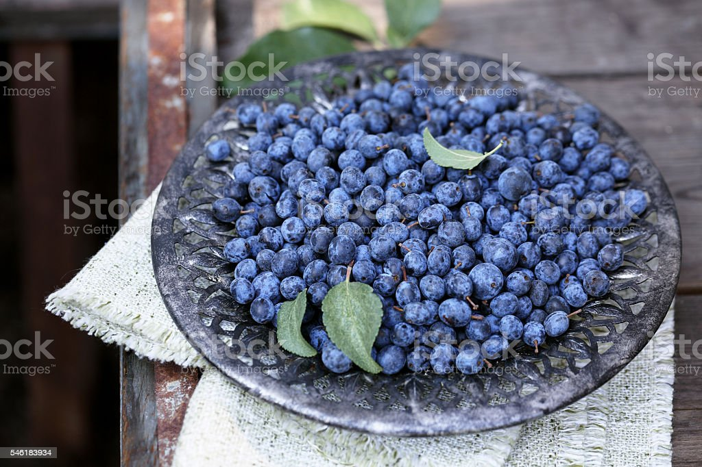 Prunus spinosa in a bowl stock photo
