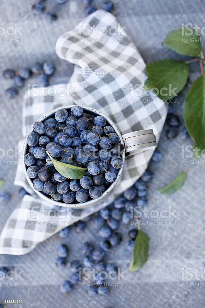 Prunus spinosa in metal cup, top view stock photo