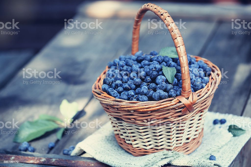 Prunus spinosa in the basket stock photo
