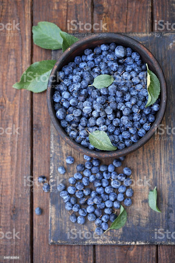 Prunus spinosa on a wooden board stock photo