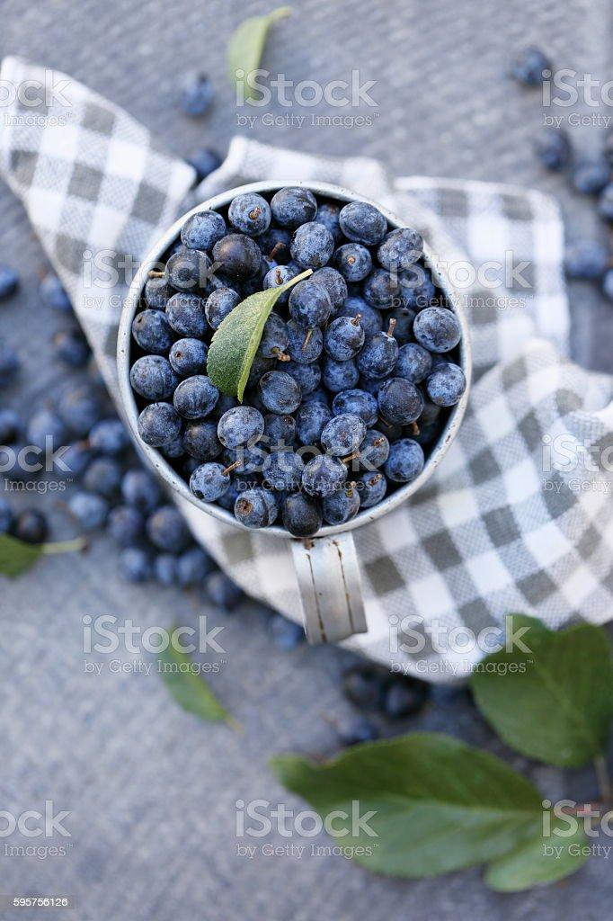 Prunus spinosa, top view stock photo